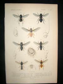 Cuvier C1840 Antique Hand Col Print. Insects 178